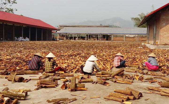 Al Sole Spices exporter, cassia exporter in Vietnam, cinnamon exporter, Al Sole Co., Ltd., Al Sole Company, Al Sole, aniseed exporter, star anise exporter in Vietnam